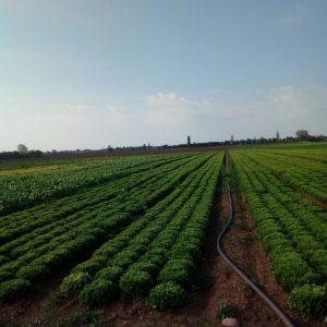 fase irrigazione getti